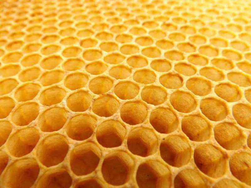 Das wertvolle Gold der Bienen