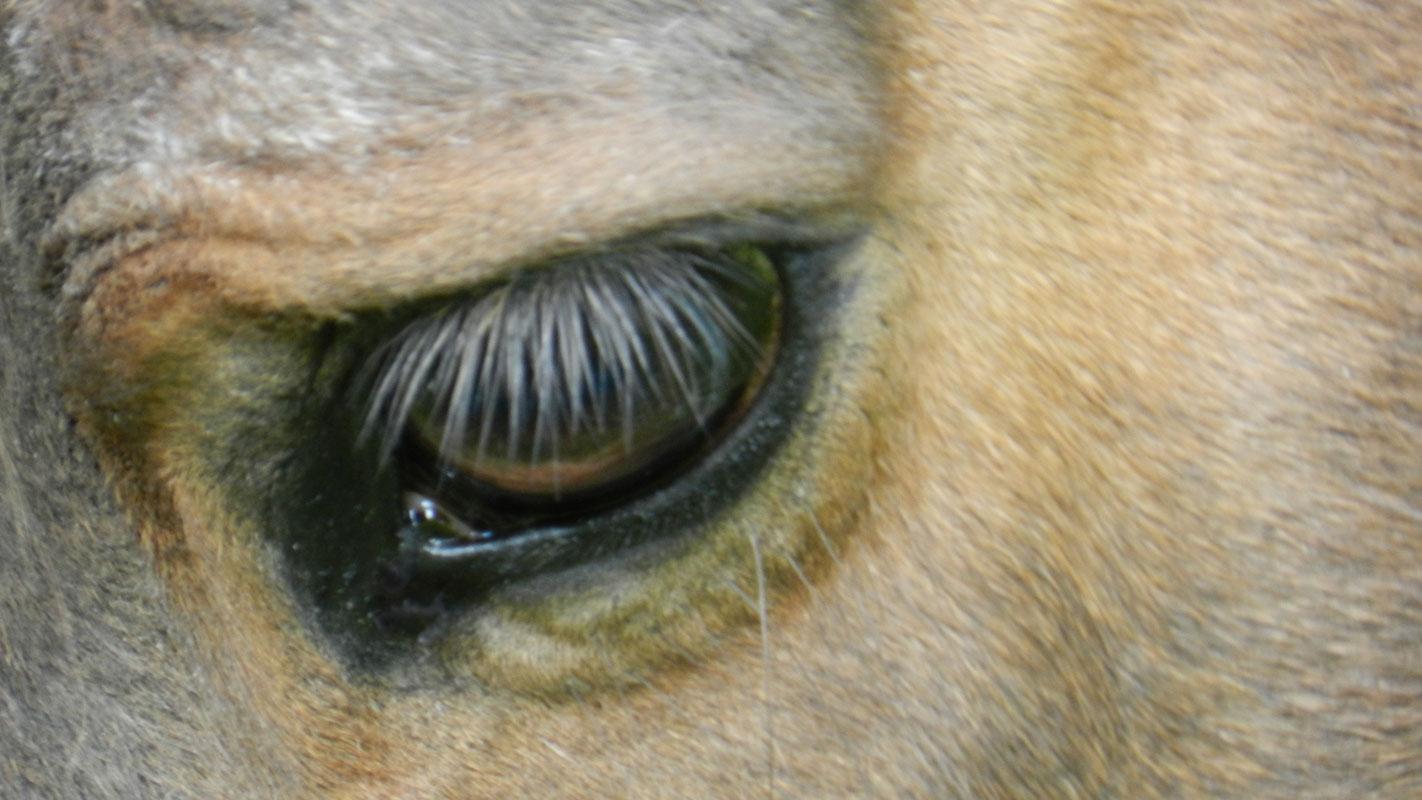 Pferdebalsam und Pferdesalbe